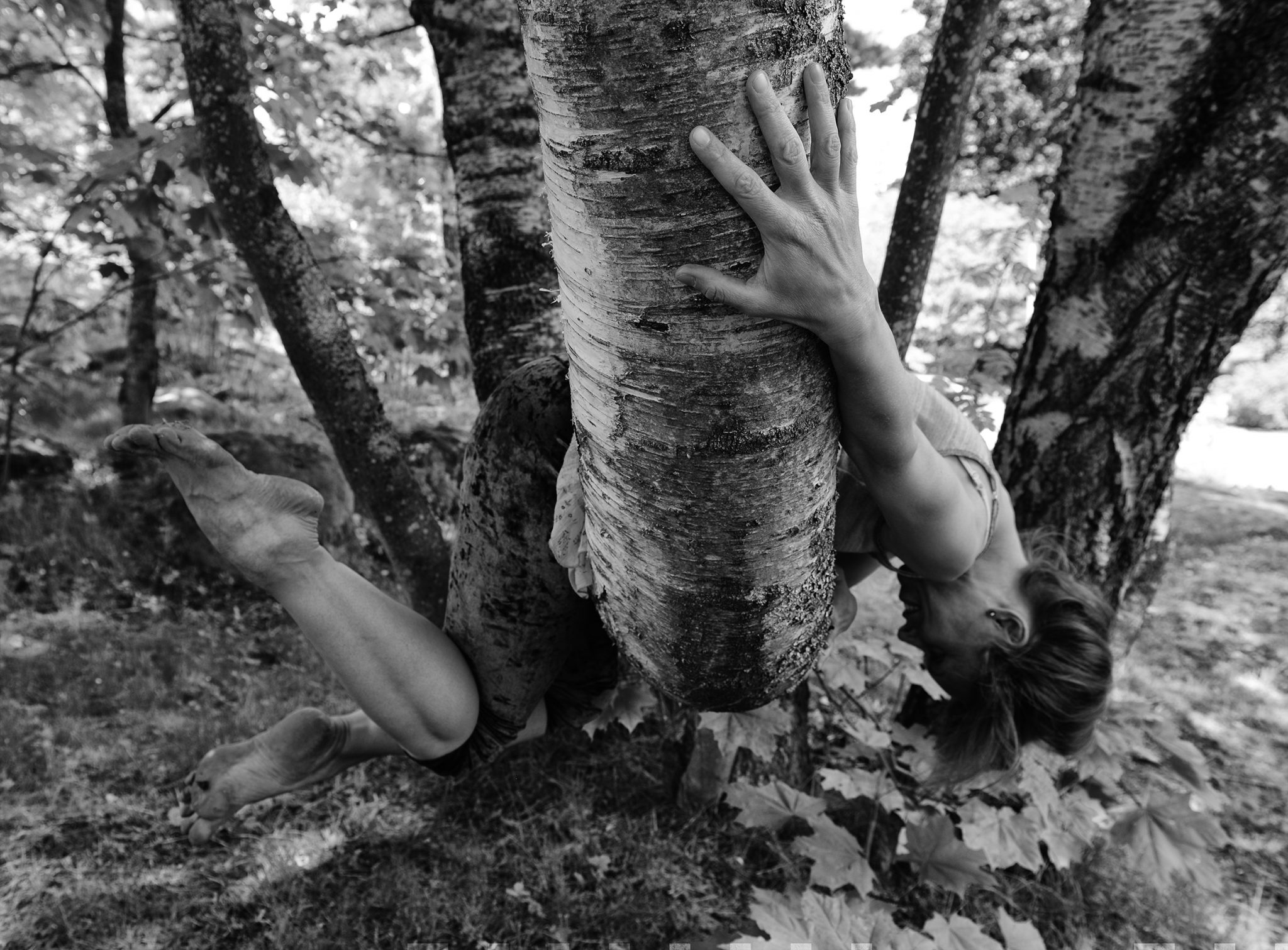 mustavalkoinen kuva jossa tanssija roikkuu puussa